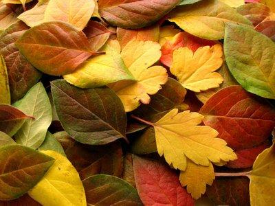 Resultado de imagem para cores do outono